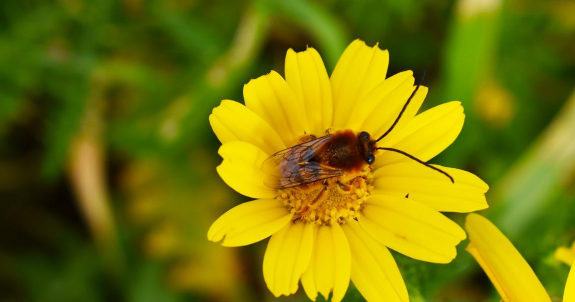 EU-wide ban on bee-harming pesticides passed