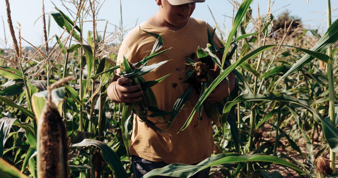 Central Link Farmer: 'Help farmers… The farmer is regressing not progressing.'