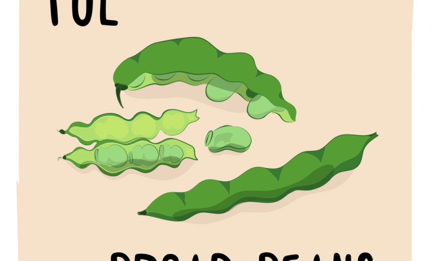 Ful - Broad beans