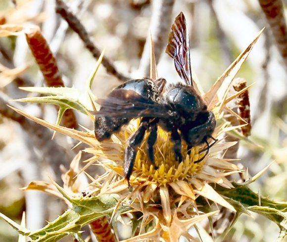 ECOLOGICA – biodiversity monitoring programme