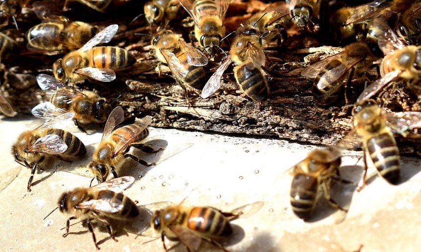 BeeAware Gozo