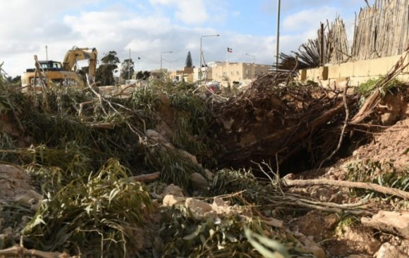Central Link: Destruction of trees in breach of permit condemned