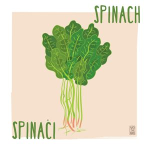What's in Season: March – Spinach