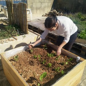 Eco Hub Community Garden at Friends of the Earth Malta