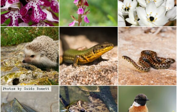 Keep protected areas protected! The case of Tal-Wej