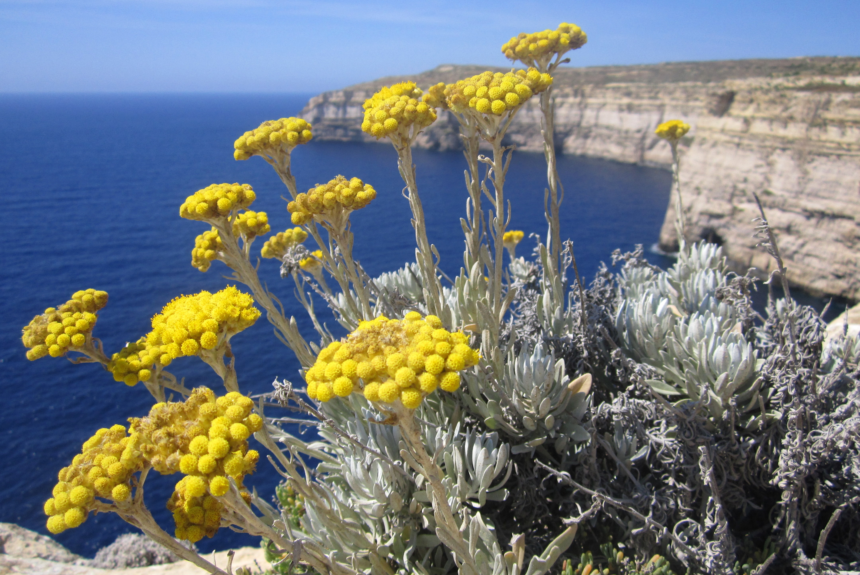 Flower of the month – May – Yellow flowers