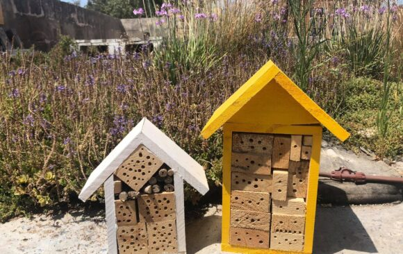 Save the Bees and Win a Bee Hotel
