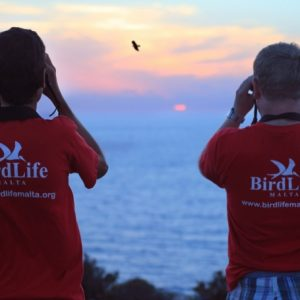 Environmental NGO condemn attacks on Birdlife Malta Volunteers