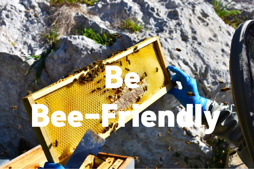 Bees are great and they pollinate the majority of the food we eat. There are easy ways of supporting their population.