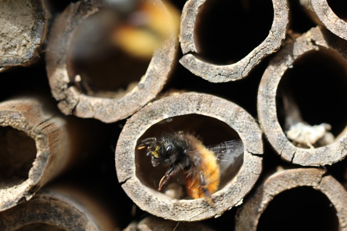 Catering for our Bees