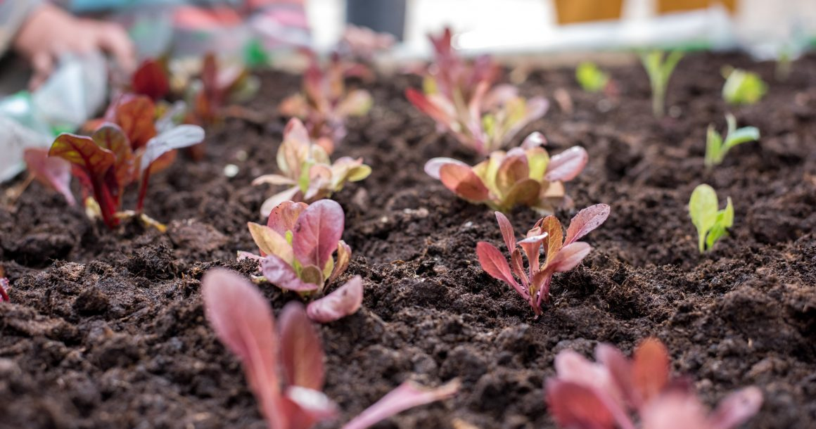 Our First Crop Growing Workshop Series – What a Success!