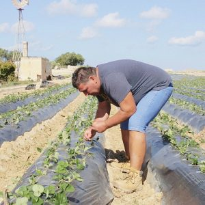 Conversations with Maltese Farmers