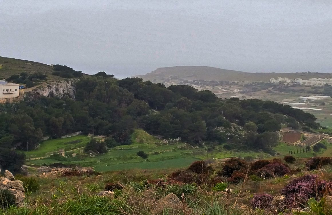 FoE Malta recommends holistic policy for trees