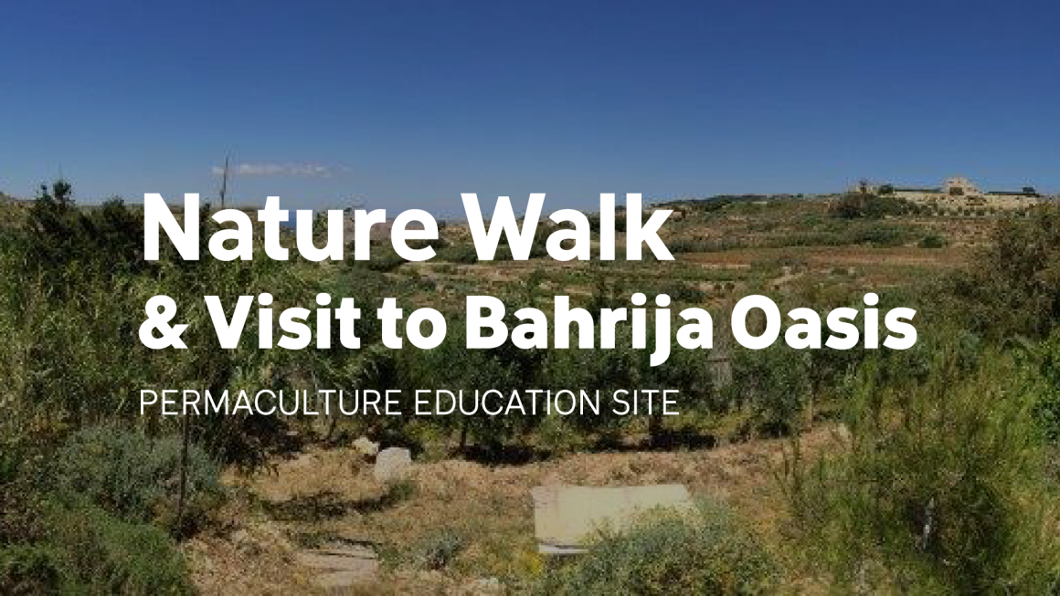 Nature Walk and Visit to a Permaculture Site