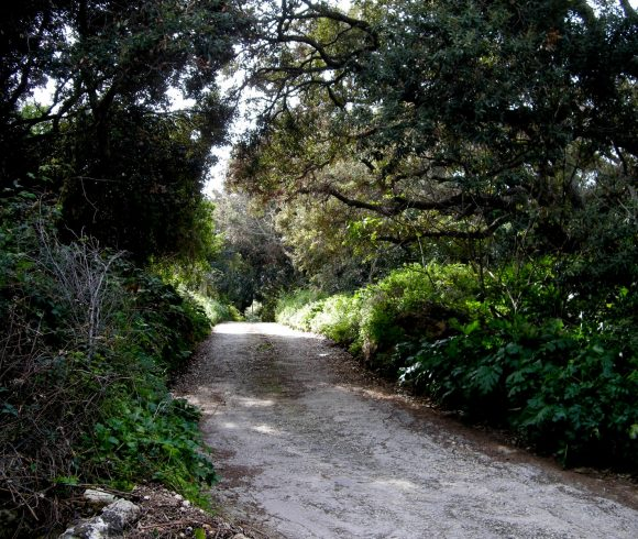 Why Malta desperately needs more trees