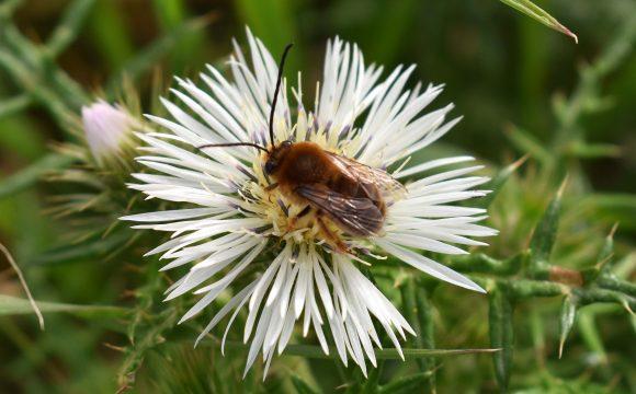 FoE Malta welcomes valley restoration programme with pollinators in mind