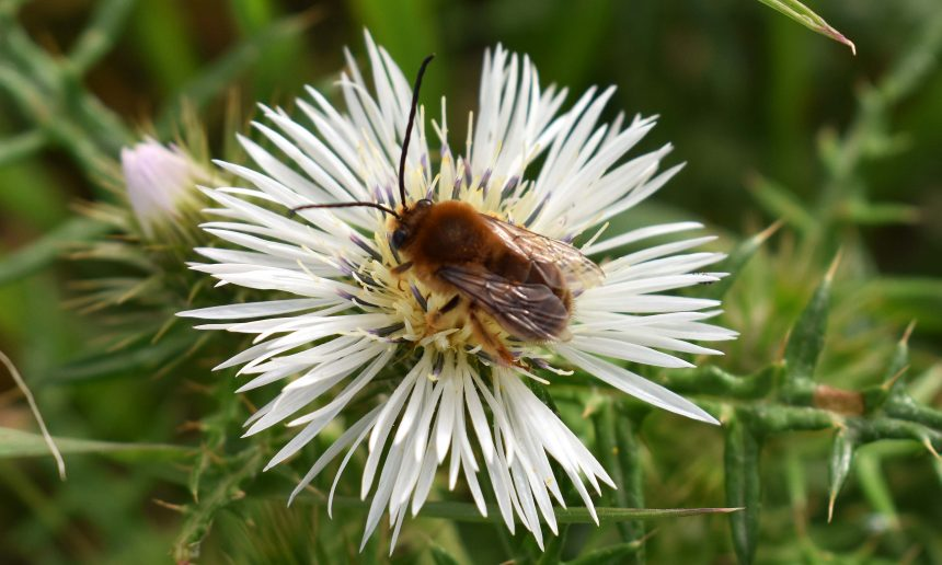 FoE Malta welcomes valley restoration programme with pollinators in mind