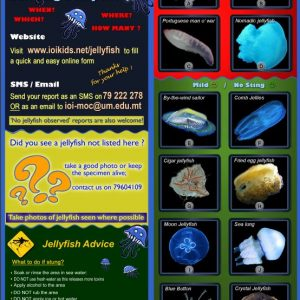 Have you seen jellyfish this summer ?