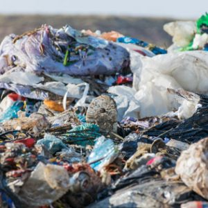 Plastic packaging failing to prevent food waste crisis, new study finds