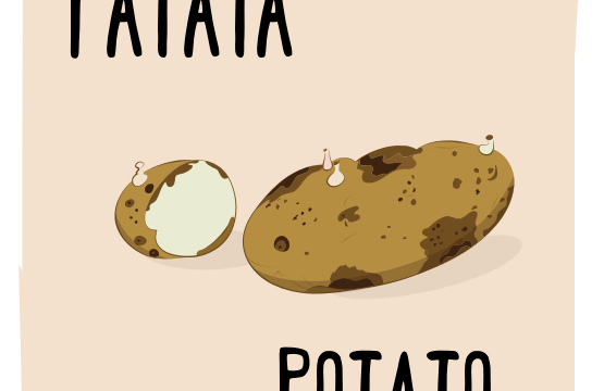 What's in season – Potato